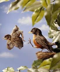 birdsleavingthenest
